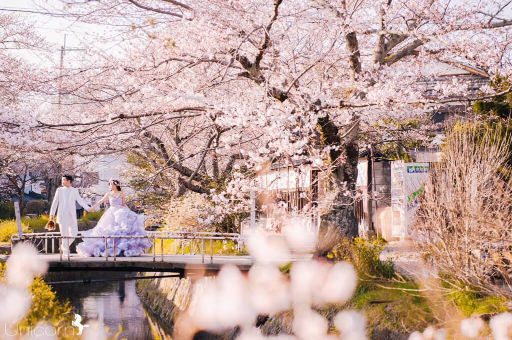 《海外婚紗》彥廷 & 雅婷 / 京都 Kyoto 櫻花季