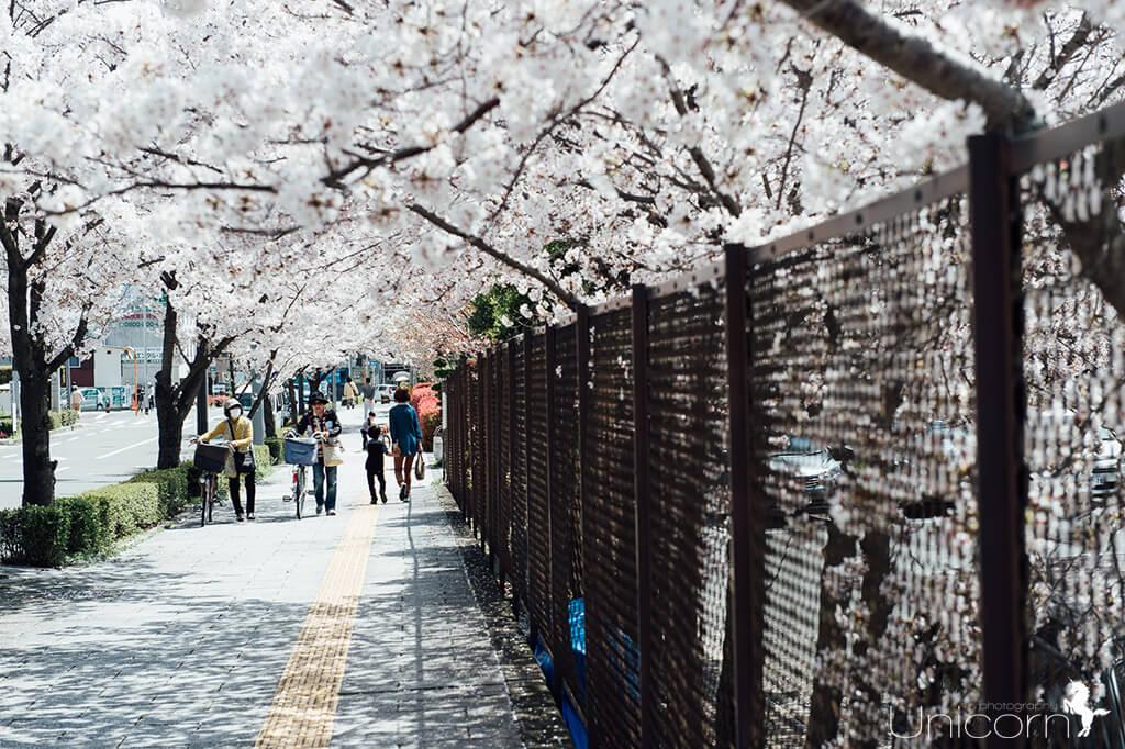 【京都拍婚紗】事物 – 千萬別做這些事!