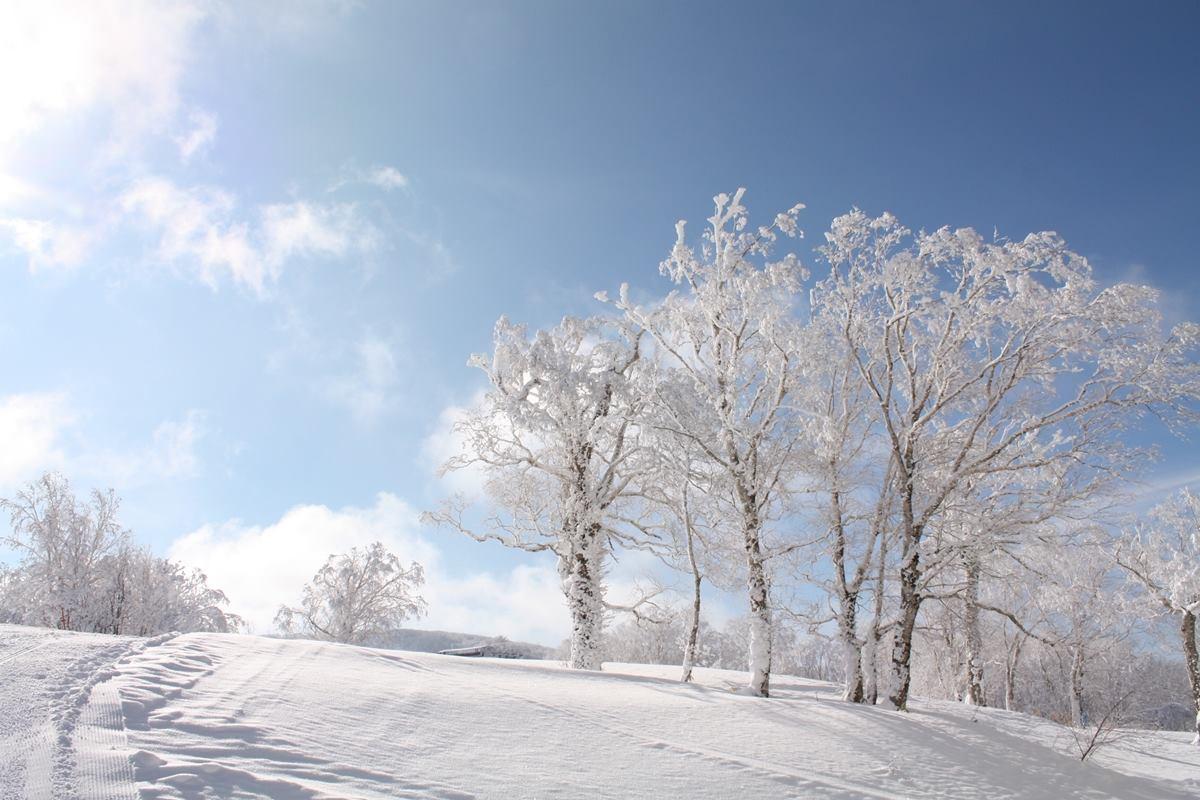 手工剪贴画 冬天雪景